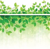 Green nature background with tree branches and leaves,EPS10 using transparencies.