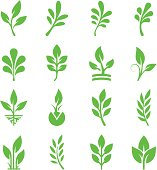 Green Leaves & Branches Icon Set