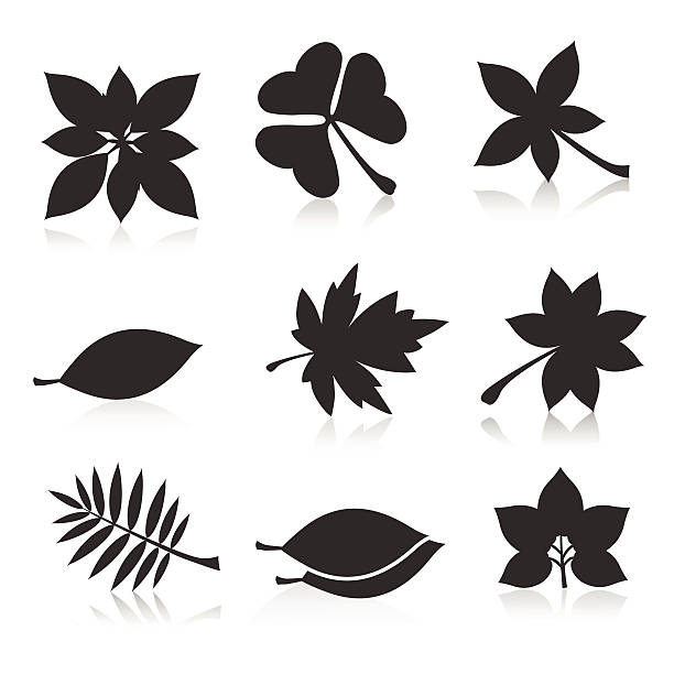 Royalty Free Black And White Maple Leaf Leaf Canadian Flag