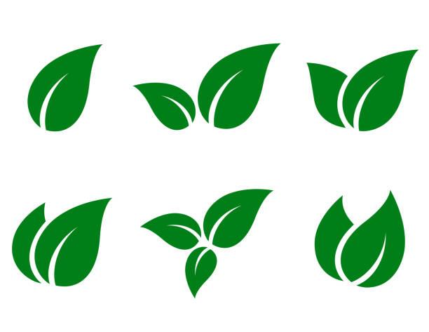 zestaw ikon zielonych liści - jedzenie wegetariańskie stock illustrations