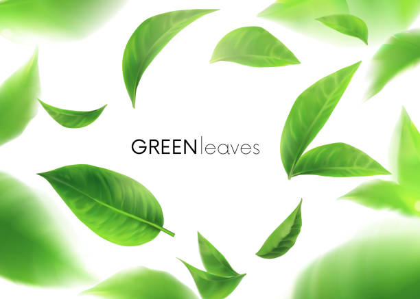 Green leaves. leaves whirl in the air. Spring. Element for design, advertising, packaging products. white background 3d Green leaves. leaves whirl in the air. Spring. Element for design, advertising, packaging products. white background 3d illustration exodus stock illustrations