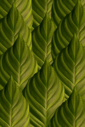 Green leaves realistic seamless
