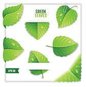 Green leaves. EPS10. Contains transparent objects.