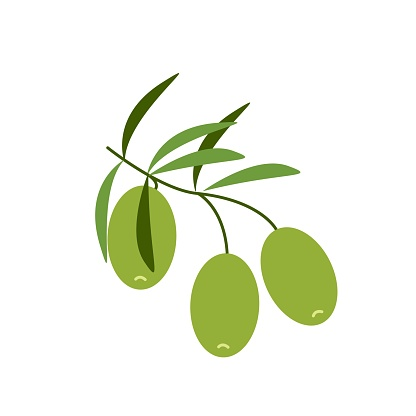 Green light olives on a branch, healthy food, vector clipart in flat style, isolate on white