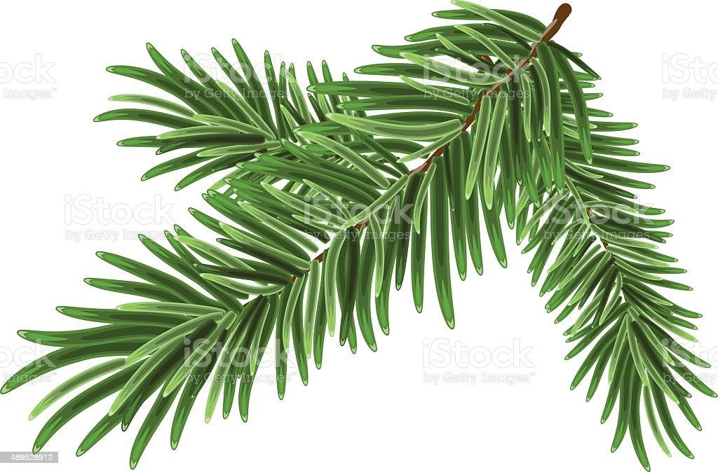 Green lush spruce branch. Fir branches vector art illustration