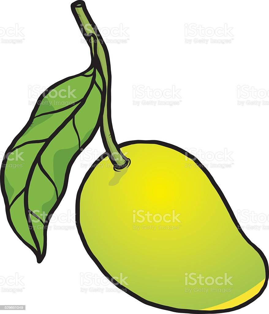 Green Mango Stock Illustration - Download Image Now - iStock
