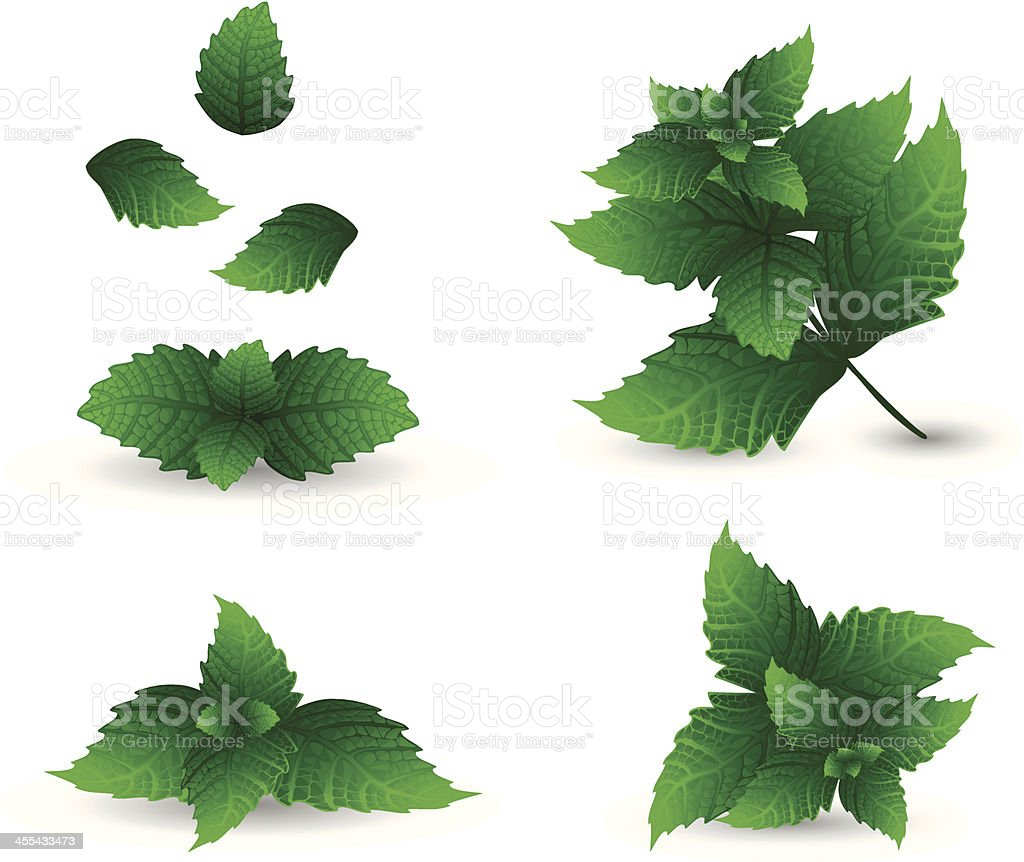 Green mint leaves and a white background vector art illustration