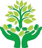 Green money tree