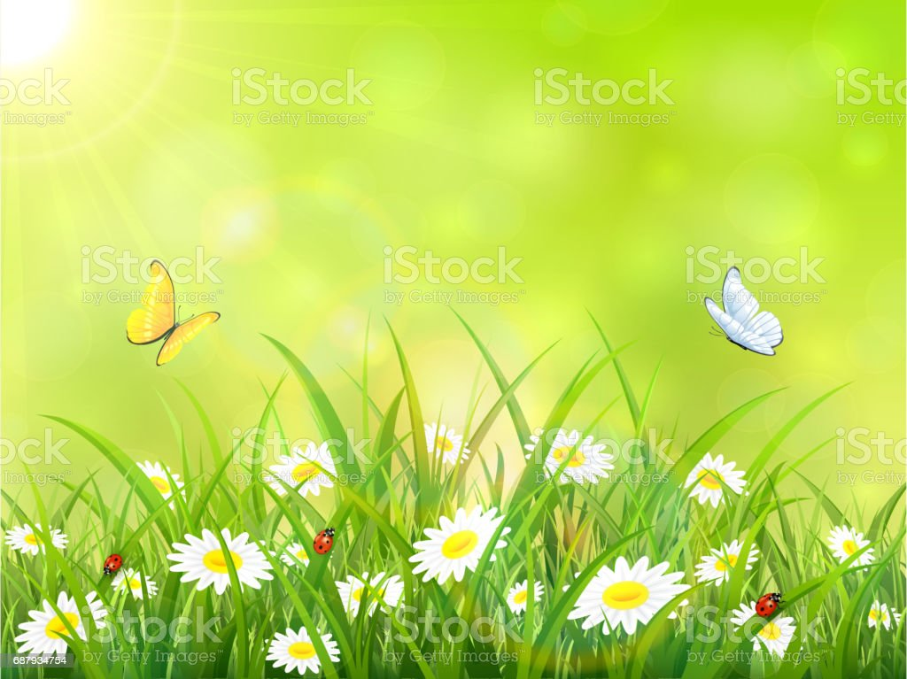 Green Nature Background With Sun And Butterflies Stock