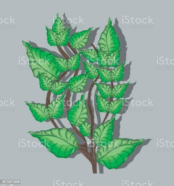 Green nice plant decoration botany vector id671371428?b=1&k=6&m=671371428&s=612x612&h=seyhtpyf7 vjwgabg2qiu6velymipnvabamsty5j3iw=