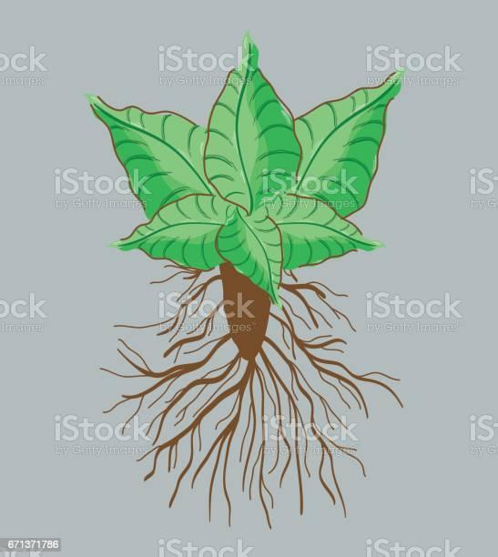 Green nice plant decoration botany vector id671371786?b=1&k=6&m=671371786&s=612x612&h=hxccbbc8m9hhabqrawevunowsmpe3ptxrjkqgxnv4cm=