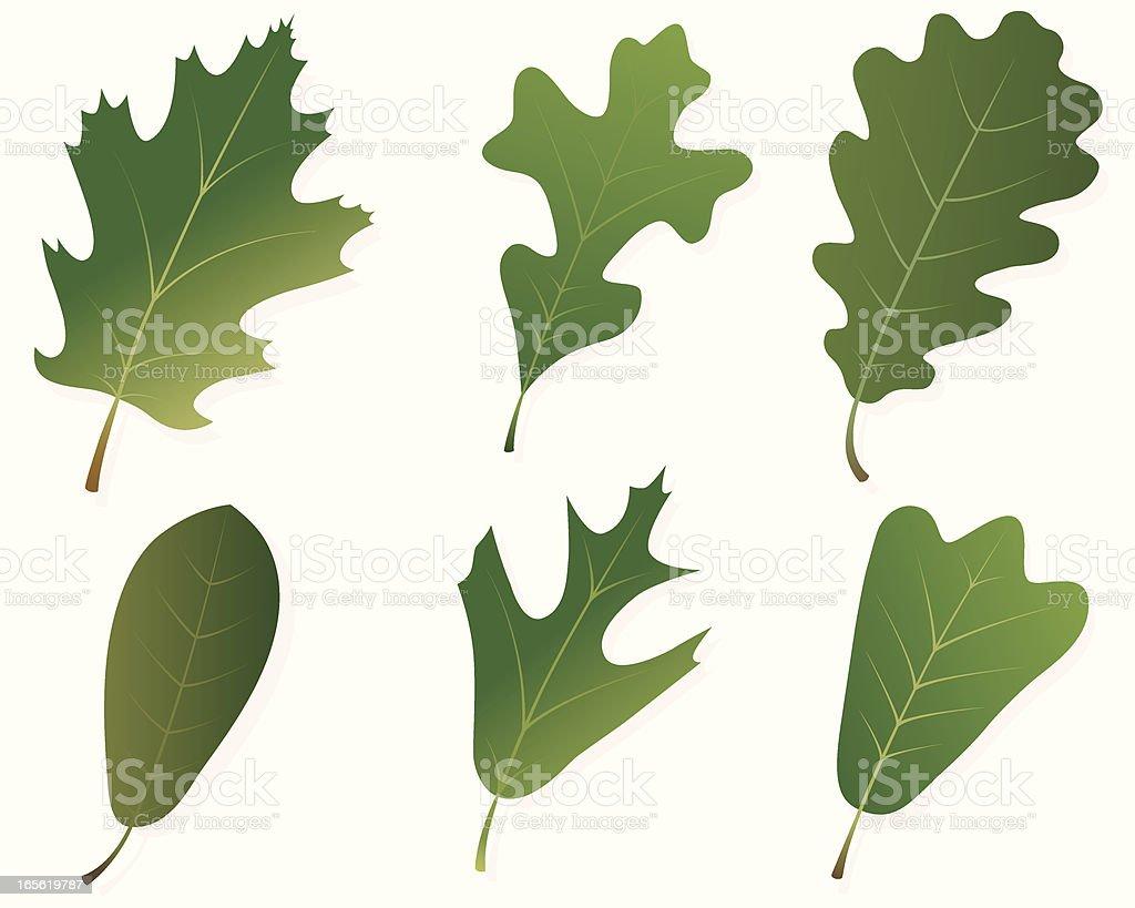 Green Oak Leaves Stock Illustration Download Image Now Istock