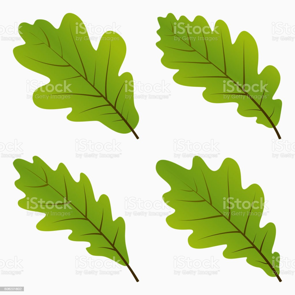 Green Oak Leaves vector art illustration