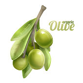 Green olive branch isolated on white background. Photo-realistic vector, 3d.Design for olive oil, natural cosmetics, health care products.vector
