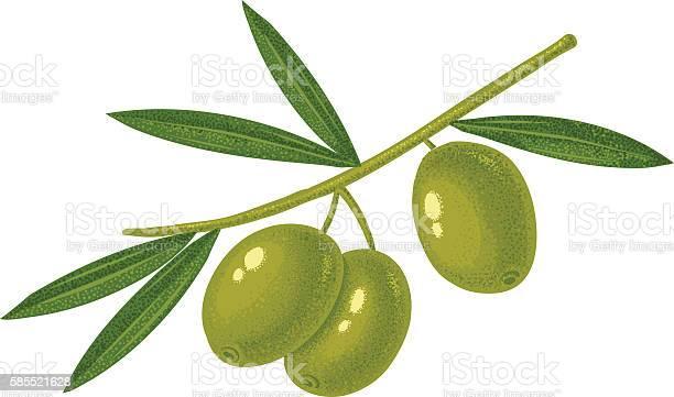 Green olives vector id585521628?b=1&k=6&m=585521628&s=612x612&h=pklpxy exknpyfvvhzzxijbirjke07h1u7wrr7a6se0=