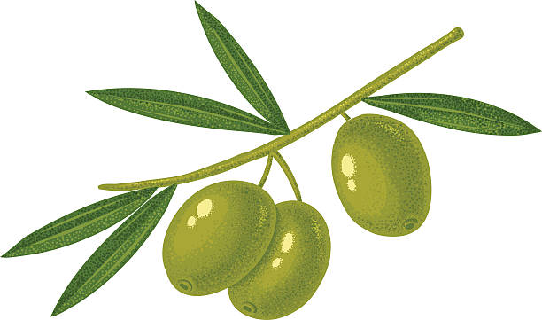 illustrations, cliparts, dessins animés et icônes de olives vertes - olivier