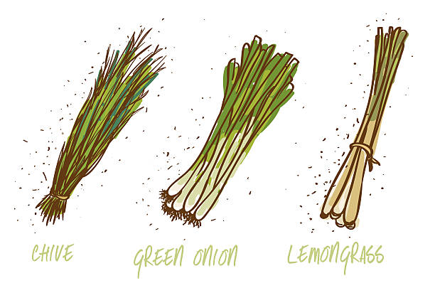 green onions, chive and lemongrass on white green onions, chive and lemongrass on white scallion stock illustrations