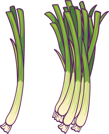 Green Onions Stock Illustration - Download Image Now