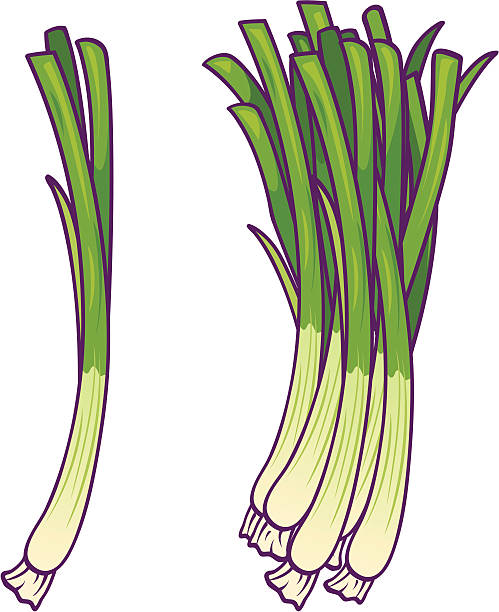 Green Onions Green Onions in bunch.  CS2 & high res JPEG included. Please see my lightboxes for other food illustrations! scallion stock illustrations