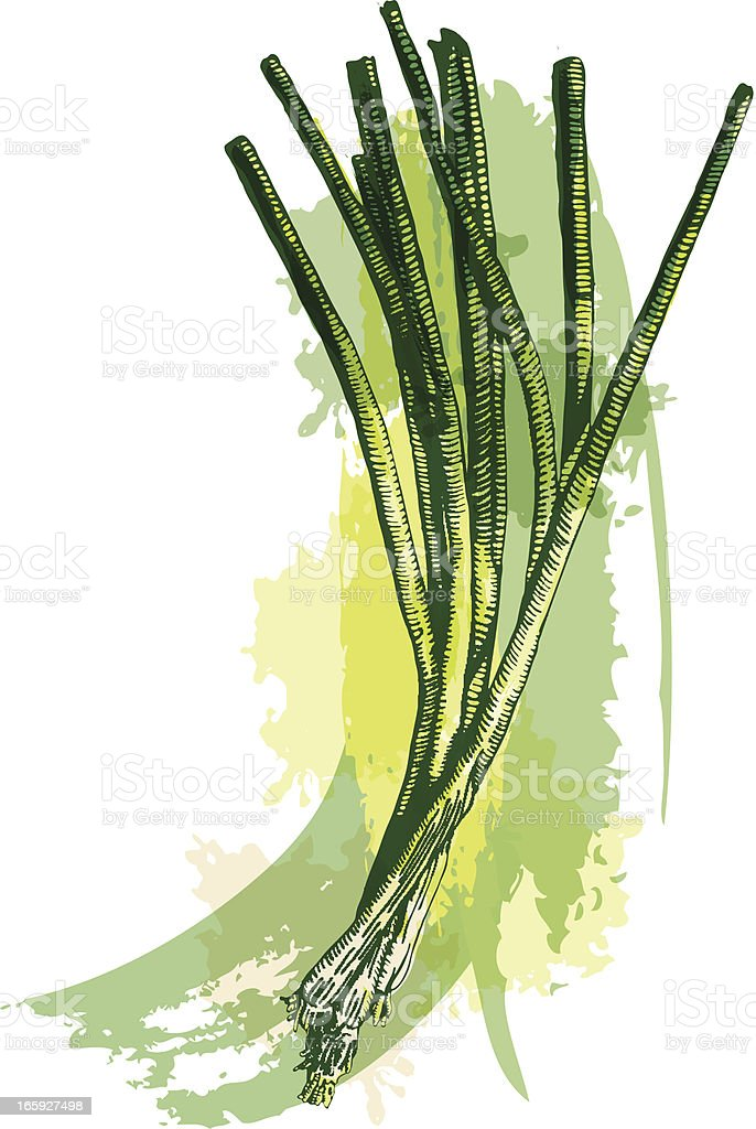 Green Onions royalty-free stock vector art