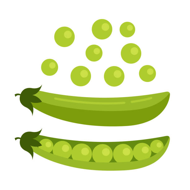 green open pea seed. fresh fruits concept. vector flat cartoon design graphic illustration icon - plant pod stock illustrations