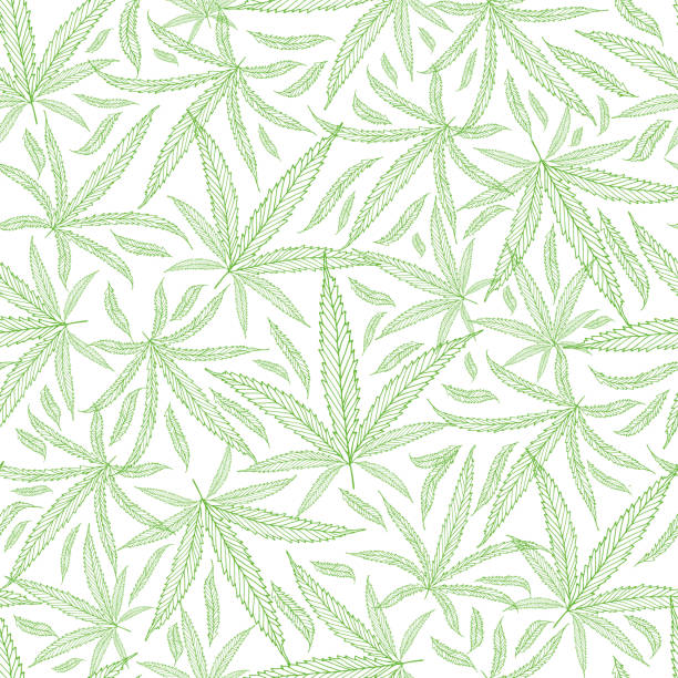 Green outline cannabis leaves textural background. Seamless vector pattern against white backdrop. Hand drawn line art repeat design. Perfect for wellness, health, medical products, packaging, print Green outline cannabis leaves textural background. Seamless vector pattern against white backdrop. Hand drawn line art repeat design. Perfect for wellness, health, medical products, packaging, print. marijuana stock illustrations