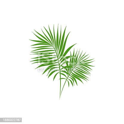 istock Green palm branches isolated on white. Summer vector illustration. 1330022787