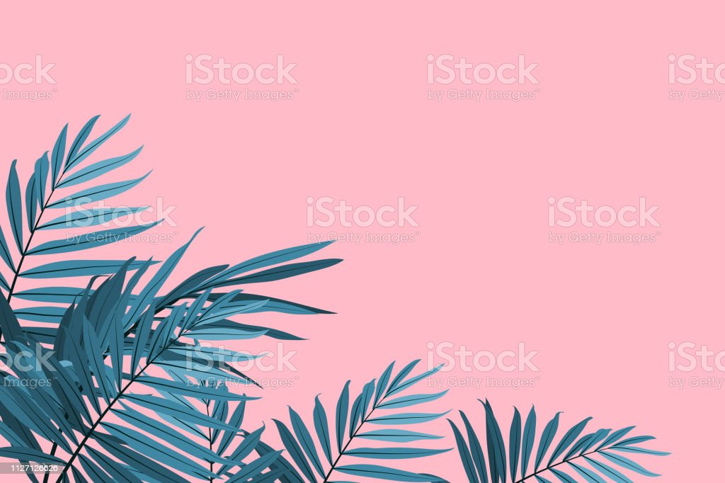 Green palm leaves on a pink background. Tropical leaves trendy background. Vector illustration royalty-free green palm leaves on a pink background tropical leaves trendy background vector illustration stock illustration - download image now