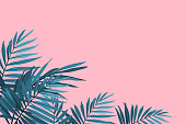 Green palm leaves on a pink background. Tropical leaves trendy background. Vector illustration
