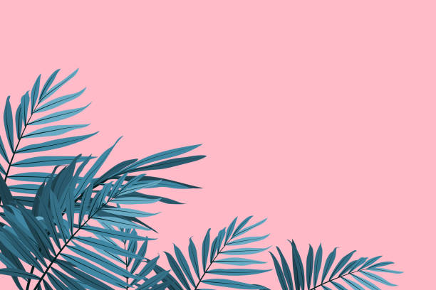 green palm leaves on a pink background. tropical leaves trendy background. vector illustration - blue silhouettes stock illustrations
