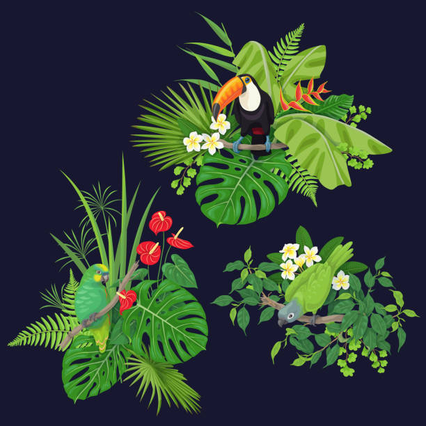 Green Parrot and Toucan on Tree Branch Green parrots and toucan sitting on tree branch.  Leaves and flowers of tropical plants and birds isolated on dark background.Vector flat illustration. amazon stock illustrations