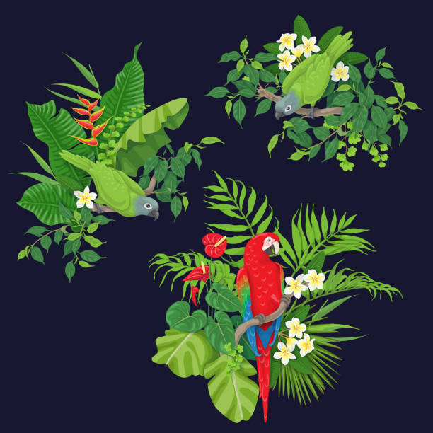 Green Parrots and Red Macaw on Tree Branch Green parrots and red macaw sitting on tree branch.  Leaves and flowers of tropical plants and birds isolated on dark background.Vector flat illustration. amazon stock illustrations