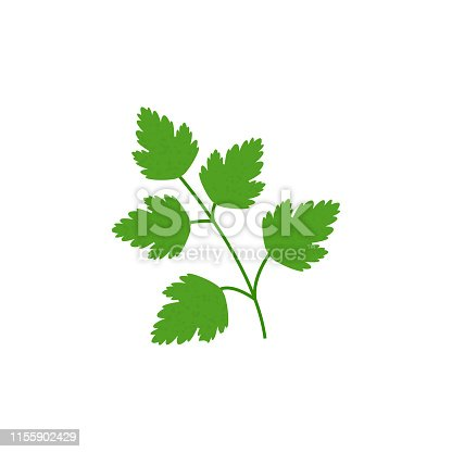 Green parsley  in flat style isolated on white background. Keto diet. Icon symbol food. Vector illustration.