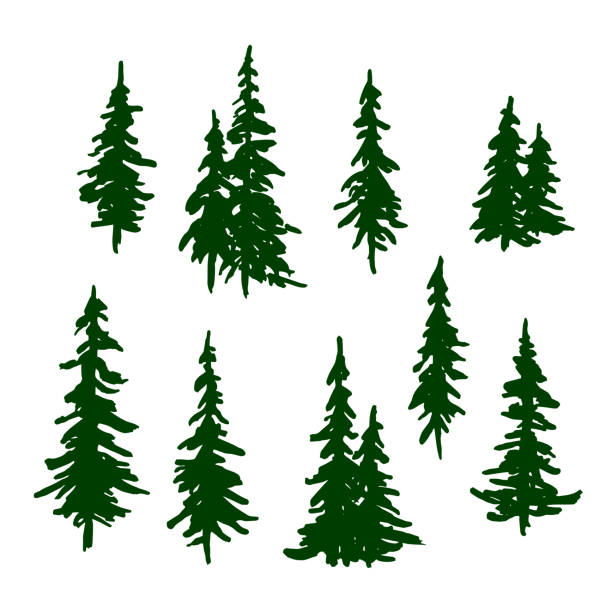 Green pine trees set for Christmas and New Year decoration. Vector Green pine trees set for Christmas and New Year decoration. Vector pine tree stock illustrations