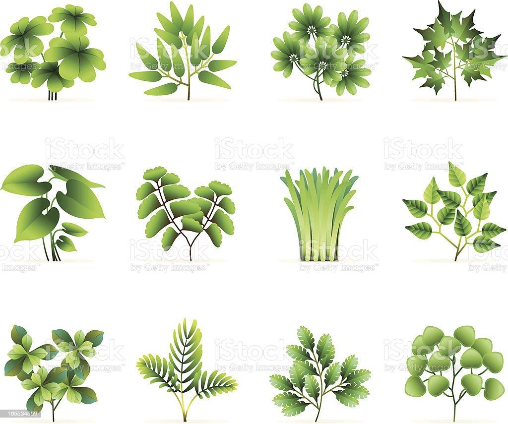 gr ne pflanze symbole stock vektor art und mehr bilder von ast pflanzenbestandteil 165534559. Black Bedroom Furniture Sets. Home Design Ideas