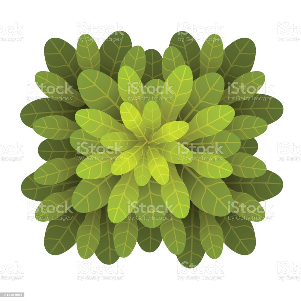 A Green Plant Or Tree Top View Vector Illustration Isolated On ... for Plant Top View Vector  156eri