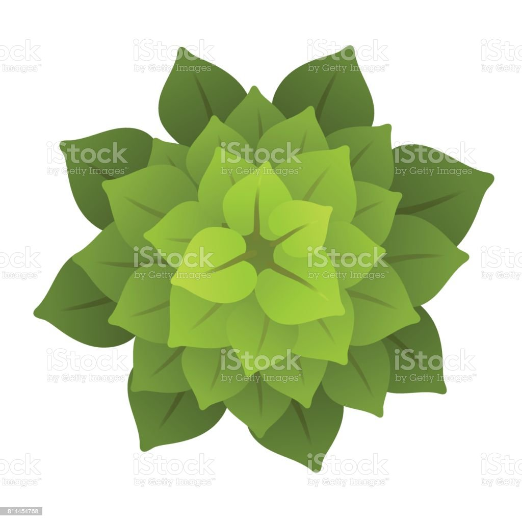 A Green Plant Or Tree Top View Vector Illustration Isolated On ... for Plant Top View Vector  45ifm