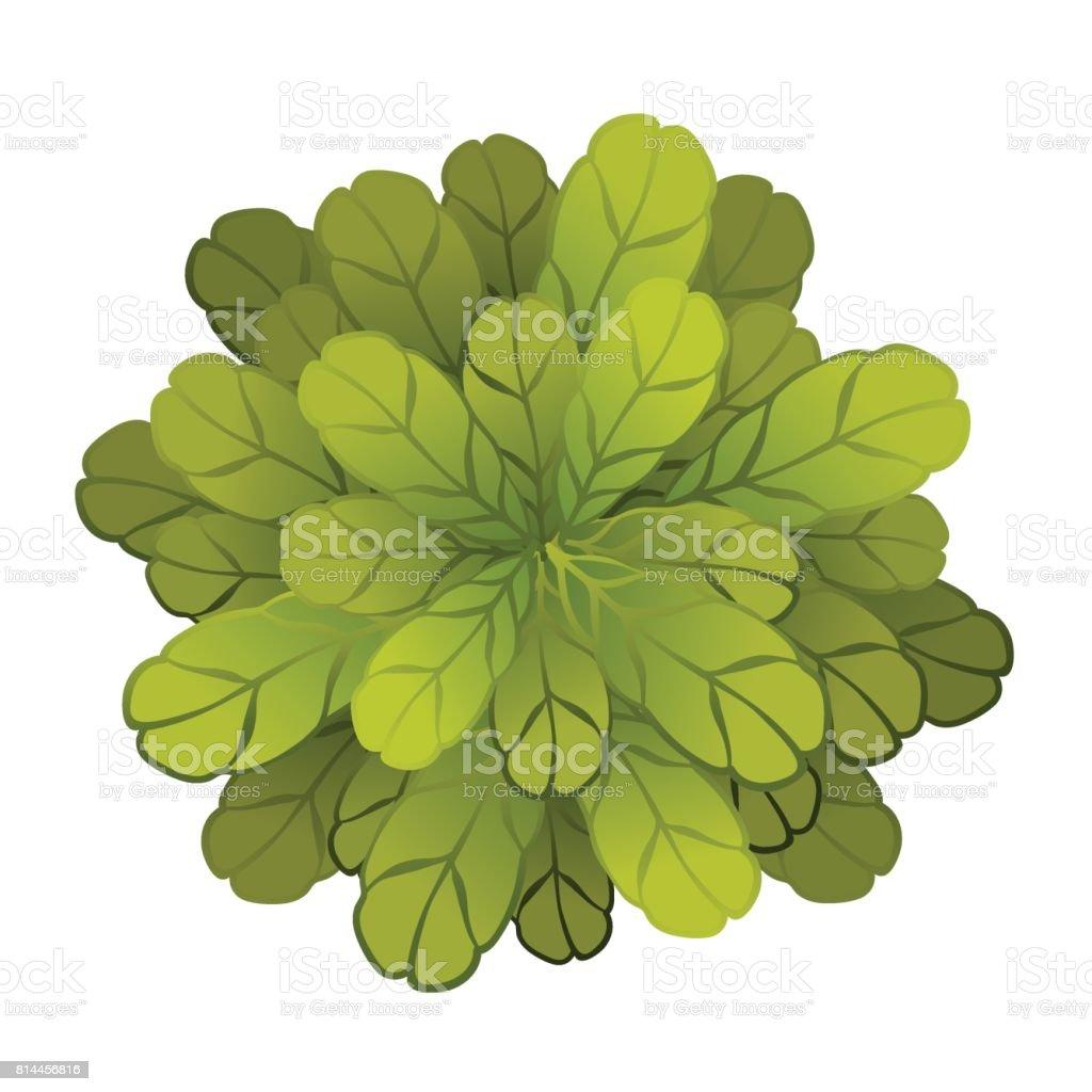 eine grüne pflanze oder baum ansicht von oben vektorillustration
