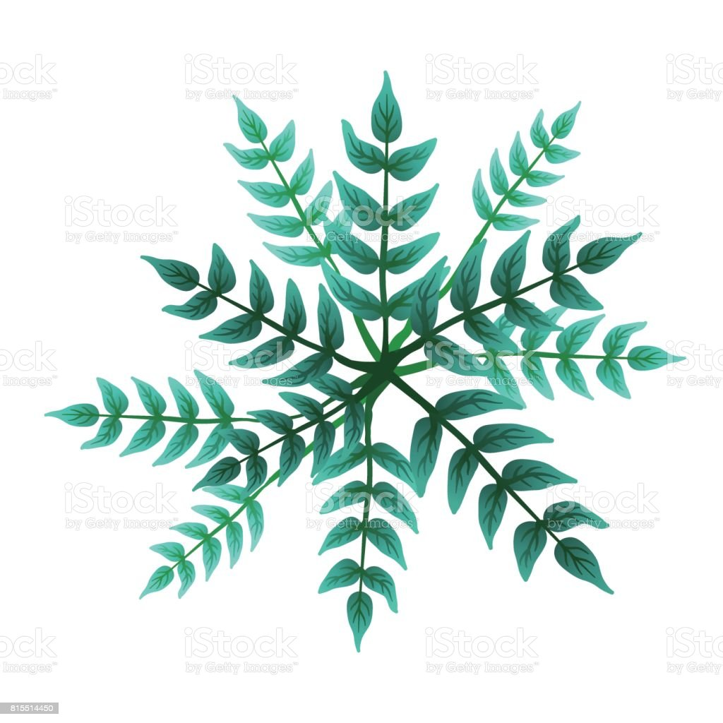A Green Plant Or Tree Top View Vector Illustration Isolated
