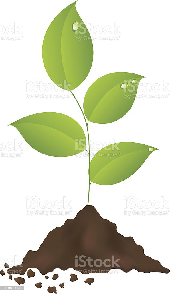 Green plant vector art illustration