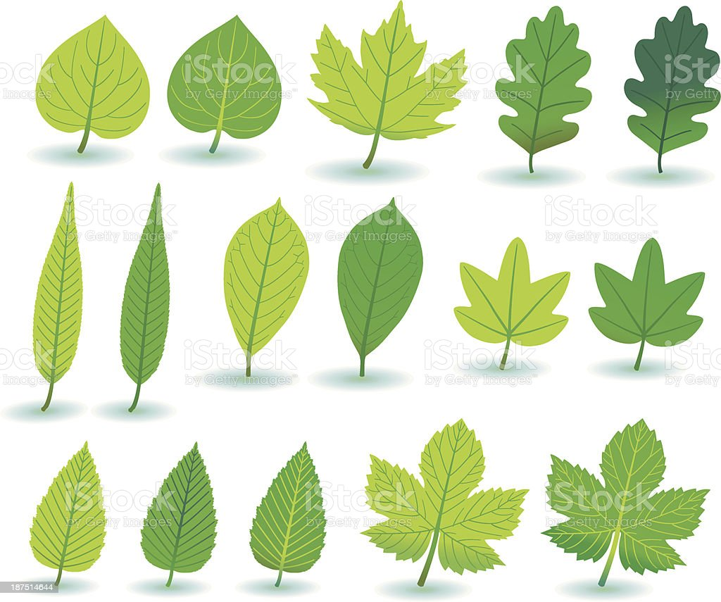 Green Plant-/and Treeleafs. vector art illustration