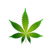 Green realistic cannabis leaf isolated on a white background for your creativity
