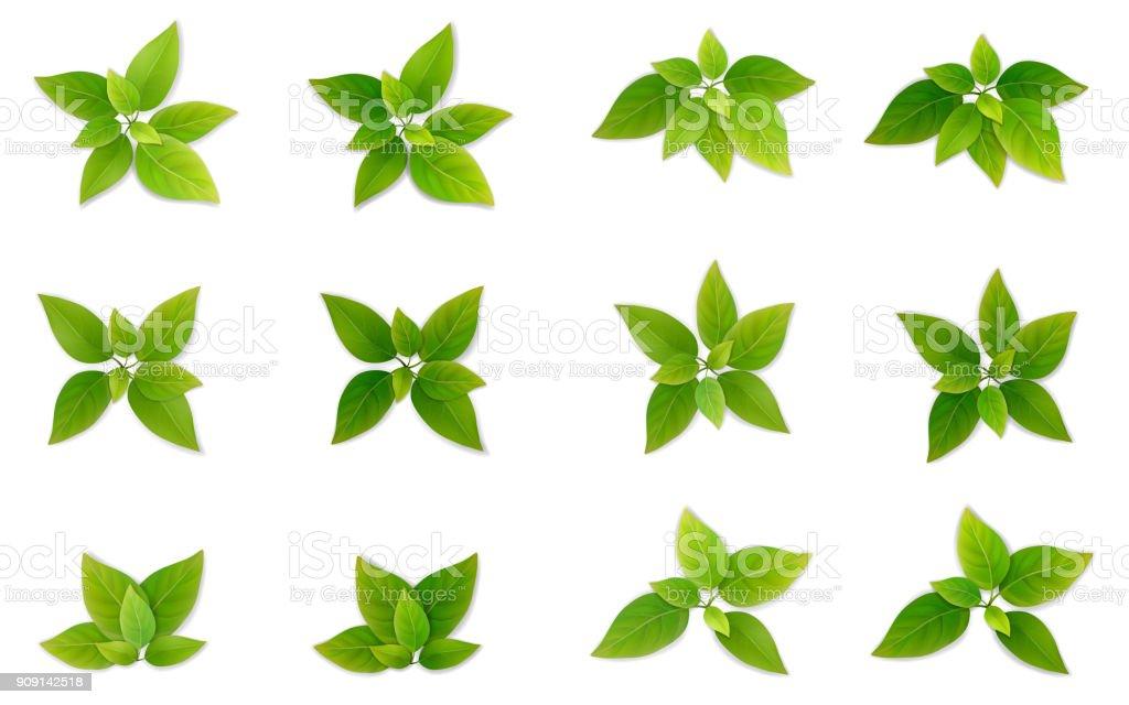 Realistis verdes hoja de conjunto. - ilustración de arte vectorial