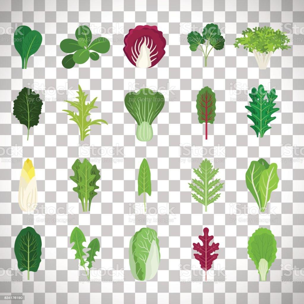 Green salad leaves on transparent background vector art illustration