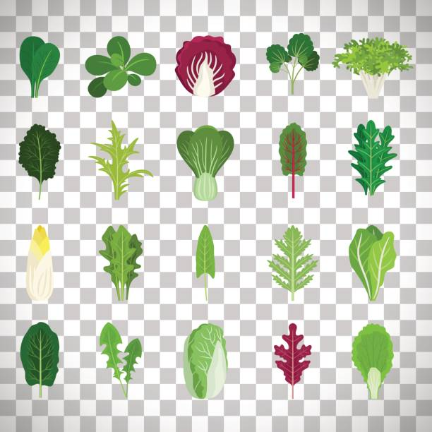 green salad leaves on transparent background - lettuce stock illustrations