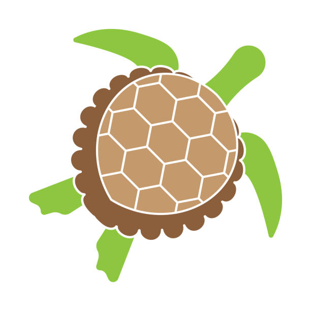 stockillustraties, clipart, cartoons en iconen met groene zeeschildpad of zeeschildpad platte pictogrammen voor apps en websites - leatherback