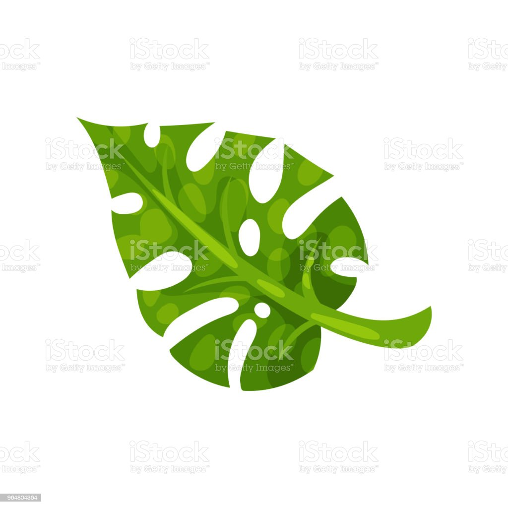 Green split-leaf of monstera. Natural element of tropical plant. Flat vector design for botanical book, poster or banner royalty-free green splitleaf of monstera natural element of tropical plant flat vector design for botanical book poster or banner stock vector art & more images of cartoon