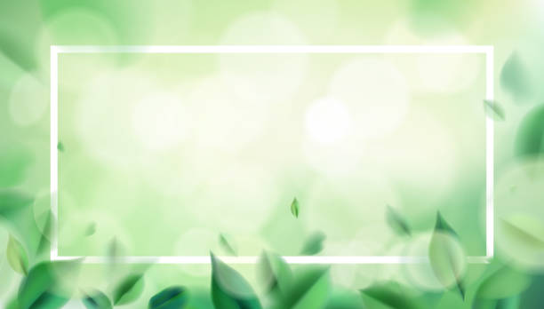 Green spring nature background with leaves Green nature background with blurred spring leaves and white frame vector illustration tranquility stock illustrations