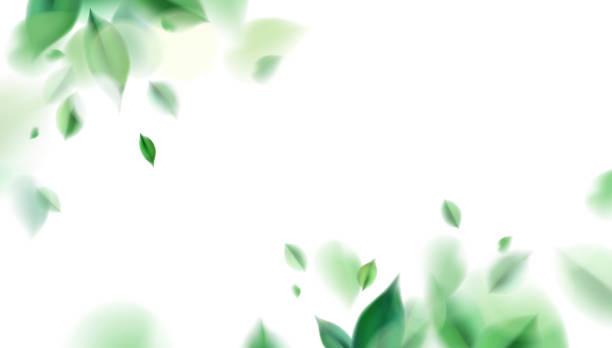 ilustraciones, imágenes clip art, dibujos animados e iconos de stock de fondo natural primaveral verde con hojas - medicina alternativa