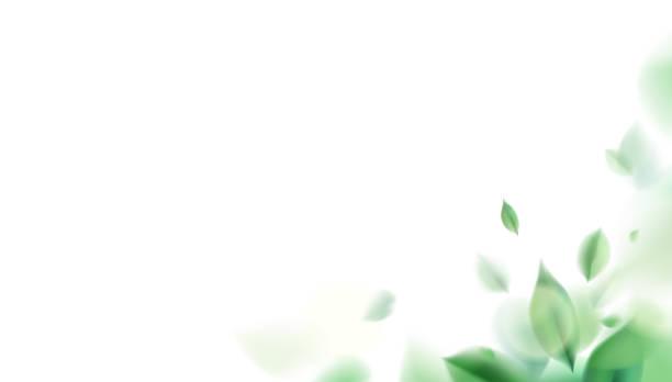 bildbanksillustrationer, clip art samt tecknat material och ikoner med grön vårnatur bakgrund med löv - spa
